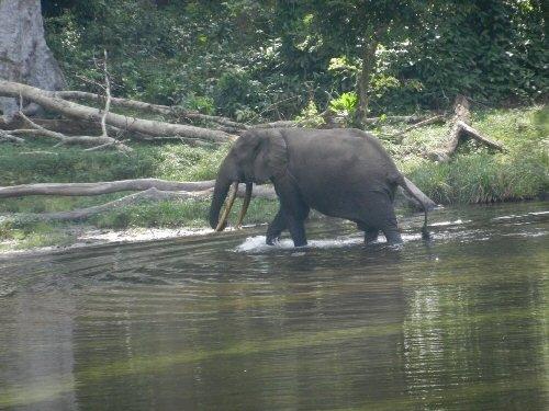 Congo : début des assises nationales du tourisme